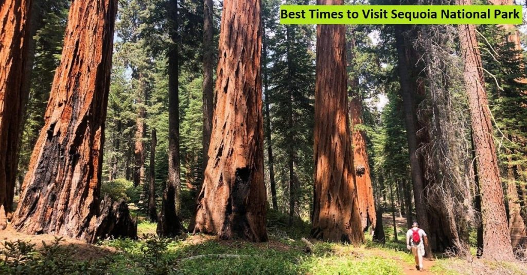 Best Times to Visit Sequoia National Park