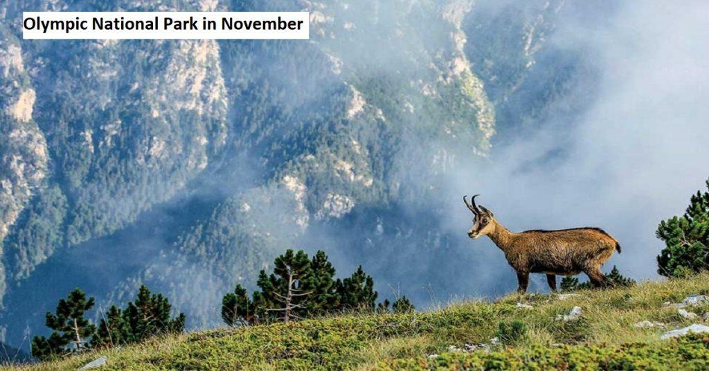 Olympic National Park in November